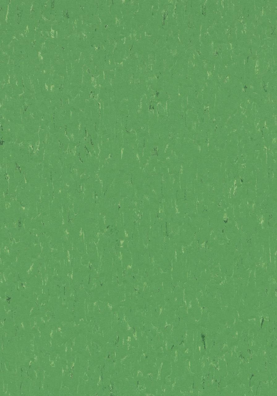 3647 Nettle green